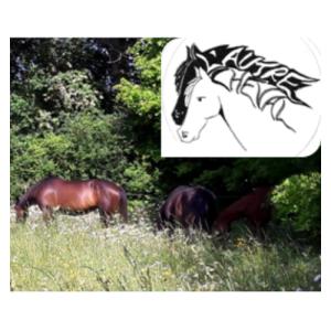l'autre cheval